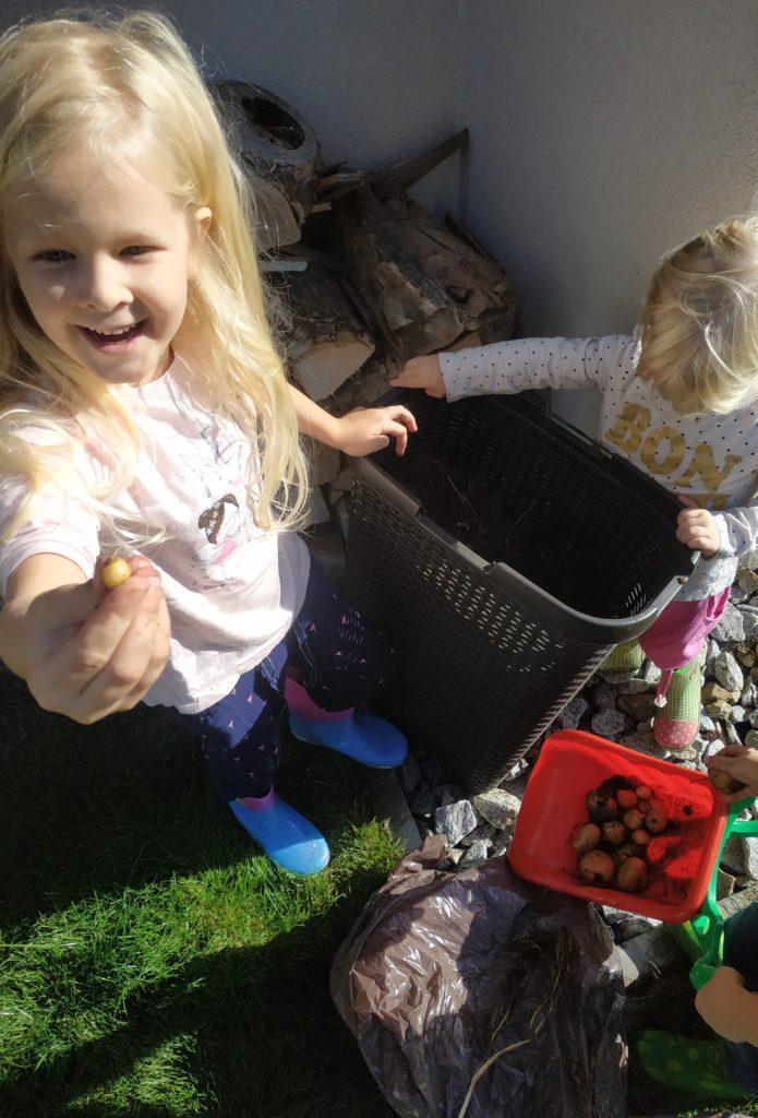Uprawa Ziemniaków w Pojemnikach na Pranie!